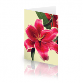 lilly-garden_card